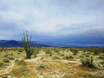 Vegetación del cactus en el desierto de Borego en California Fotos de archivo libres de regalías