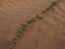 Vegetación del desierto Fotografía de archivo libre de regalías