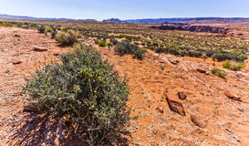 Vegetación del desierto de Arizona septentrional Imágenes de archivo libres de regalías