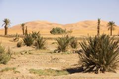 Vegetación del desierto debajo del cielo limpio Fotografía de archivo