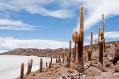 Vegetación del desierto en la isla de Incahuasi (Bolivia))) Imagen de archivo libre de regalías
