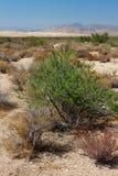 Vegetación del desierto y dunas de Kelso Imagen de archivo