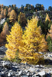Vegetación del otoño Foto de archivo libre de regalías