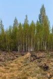 Vegetación del pantano en primavera Imagenes de archivo