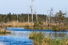 Vegetación del pantano en primavera Imagen de archivo