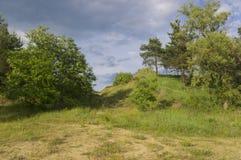 Vegetación del verano antes de la lluvia Fotografía de archivo libre de regalías