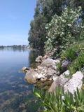 Vegetación densa en la costa Foto de archivo