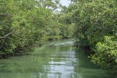 Vegetación densa sobre el río foto de archivo