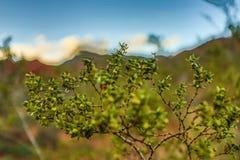 Vegetación en desierto Fotografía de archivo libre de regalías