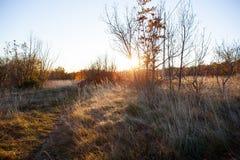Vegetación en el campo del karst Imagen de archivo libre de regalías