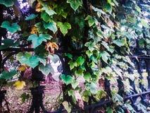 Vegetación en el centro de Corfú Foto de archivo