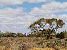 Vegetación en el interior de Australia Fotografía de archivo libre de regalías
