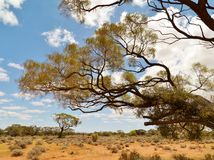 Vegetación en el interior de Australia Imagen de archivo