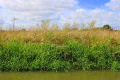 Vegetación en el lado de la orilla del río imagenes de archivo