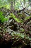 Vegetación en el lado de una cara de la roca Fotografía de archivo