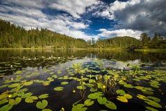 Vegetación en el pequeño lago de la montaña cerca de Jervskogen, área del verano de Jonsvatnet en Noruega media foto de archivo libre de regalías