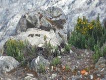 Vegetación en más de 4000 metros Fotos de archivo libres de regalías