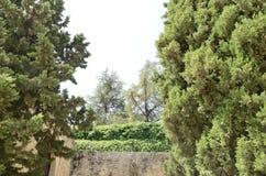 Vegetación enorme al lado de la pared de piedra Imagenes de archivo