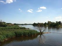 Vegetación enorme en el banco de un río Imagen de archivo libre de regalías