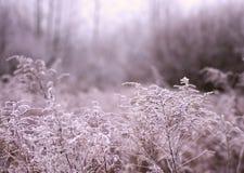 Vegetación, escarcha Foto de archivo libre de regalías