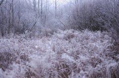 Vegetación, escarcha Fotografía de archivo