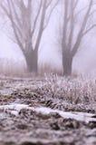 Vegetación, escarcha Fotos de archivo