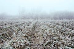Vegetación, escarcha Imagen de archivo libre de regalías