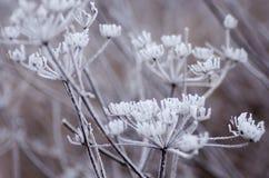 Vegetación, escarcha Fotografía de archivo libre de regalías
