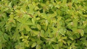 Vegetación fresca brillante verde con descensos de rocío metrajes