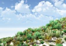 Vegetación herbácea en una superficie arenosa Foto de archivo