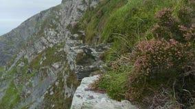 Vegetación hermosa en los acantilados escarpados de Kerry almacen de video