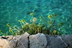 Vegetación mediterránea sobre el mar adriático hermoso Fotografía de archivo libre de regalías