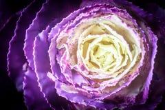 Vegetación púrpura Foto de archivo libre de regalías