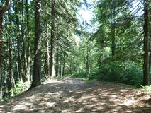 Vegetación salvaje de los bosques de la montaña Fotografía de archivo