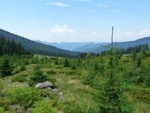 Vegetación salvaje de los bosques de la montaña Fotos de archivo libres de regalías