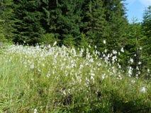 Vegetación salvaje de los bosques de la montaña Foto de archivo libre de regalías