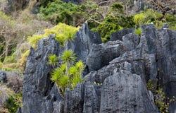 Vegetación tropical Imagen de archivo libre de regalías