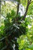 Vegetación tropical en la Florida del sur Foto de archivo