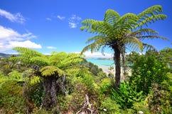 Vegetación tropical en la península de Coromandel Fotos de archivo libres de regalías