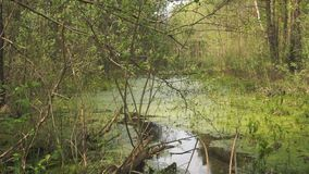 Vegetación verde del pantano metrajes