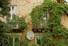 Vegetación verde en una pared de ladrillo de una casa vieja con ventanas Fotos de archivo libres de regalías
