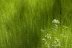 Vegetación verde y flor blanca Columbia Británica canadá Imagenes de archivo
