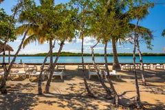 Vegetaci?n y Palapas en la isla caribe?a hermosa de Belice fotografía de archivo