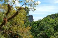 Vegetación rica y el top del templo antiguo del maya en Tikal Imágenes de archivo libres de regalías