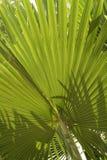 Vegetación tropical Fotografía de archivo libre de regalías