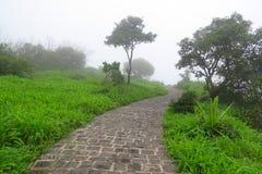 Vegetaciones de la monzón Imagen de archivo libre de regalías