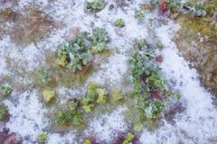 Vegetaion congelé sur l'au sol de forêt Images libres de droits