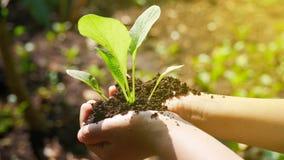 Vegetais à disposição foto de stock royalty free