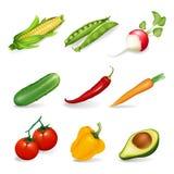 Vegetais ajustados Fotos de Stock