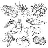 Vegetais ajustados ilustração do vetor
